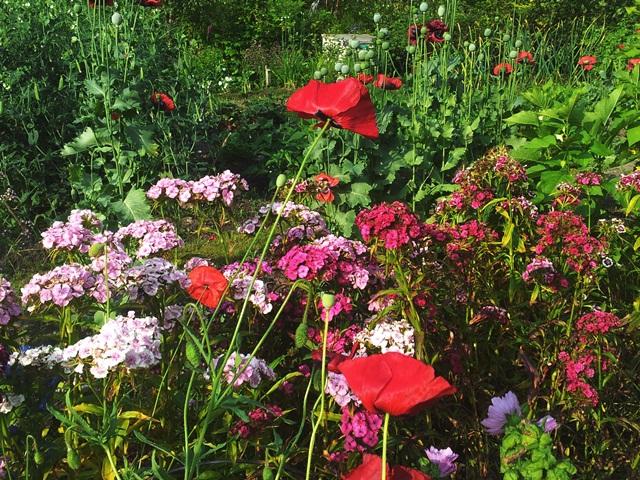 Community garden in the summer