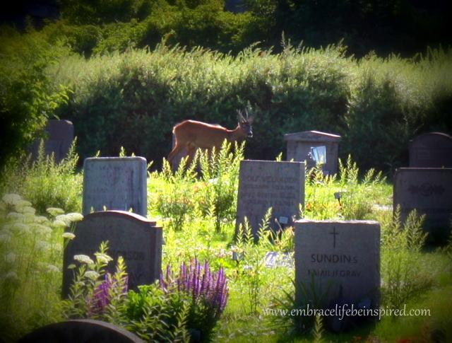 Deer in Cemetery 1