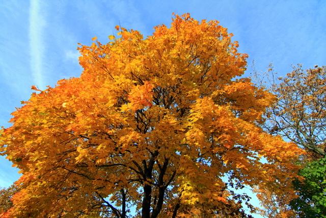 Fall leaves in Rauma, Finland